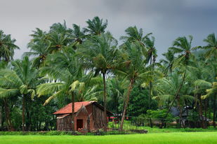 Village Scene by ramnath, Image Photography, Print on Paper, Green color