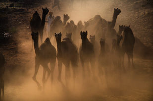 A mystic world of Pushkar... by Ravindra Kumar Tanwar, Image Photography, Digital Print on Archival Paper, Brown color