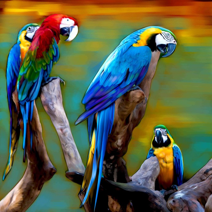 Macaws By The Print Studio