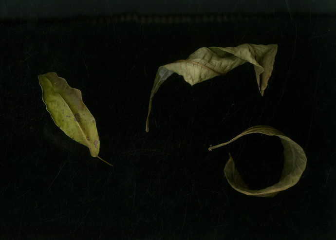 dried leaves by Isha Gahlot, Digital Photography, Digital Print on Archival Paper, Black color