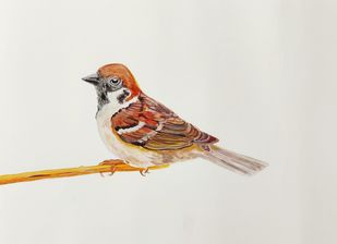 Sparrow by mahesh verma, Impressionism Painting, Watercolor on Paper, Westar color