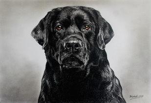 Black Dog by Muralidhar Suvarna, Illustration Drawing, Color Pencil on Paper, Woodsmoke color