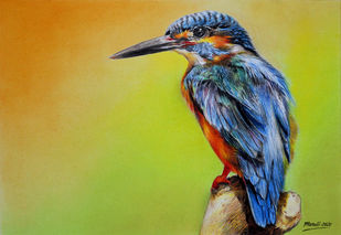 Kingfisher by Muralidhar Suvarna, Photorealism Drawing, Color Pencil on Paper, Peridot color