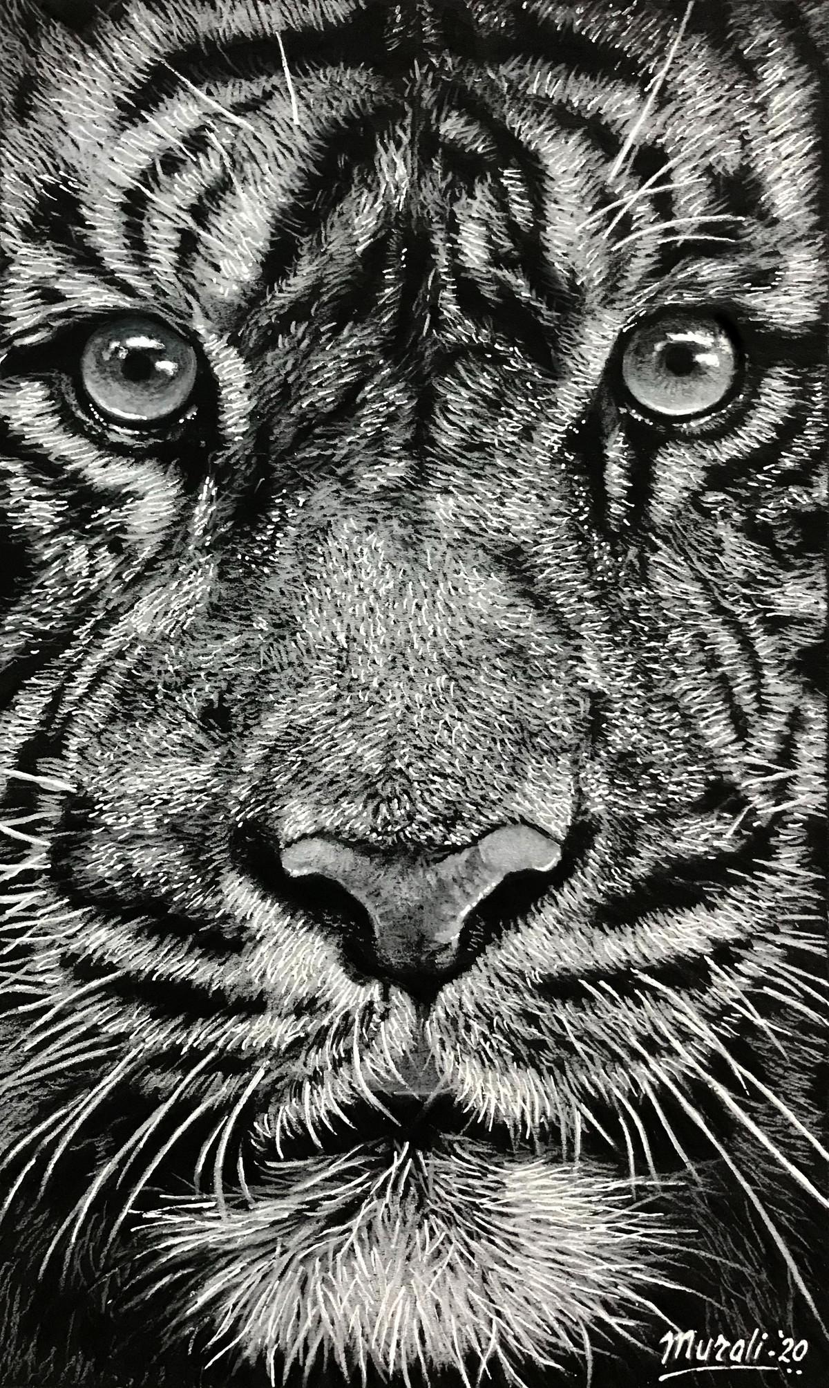 Tiger Closeup by Muralidhar Suvarna, Illustration Drawing, Pencil on Paper, Gray Nickel color