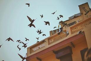 In Flight by Harsheen Kaur, Image Photography, Digital Print on Enhanced Matt, Shingle Fawn color