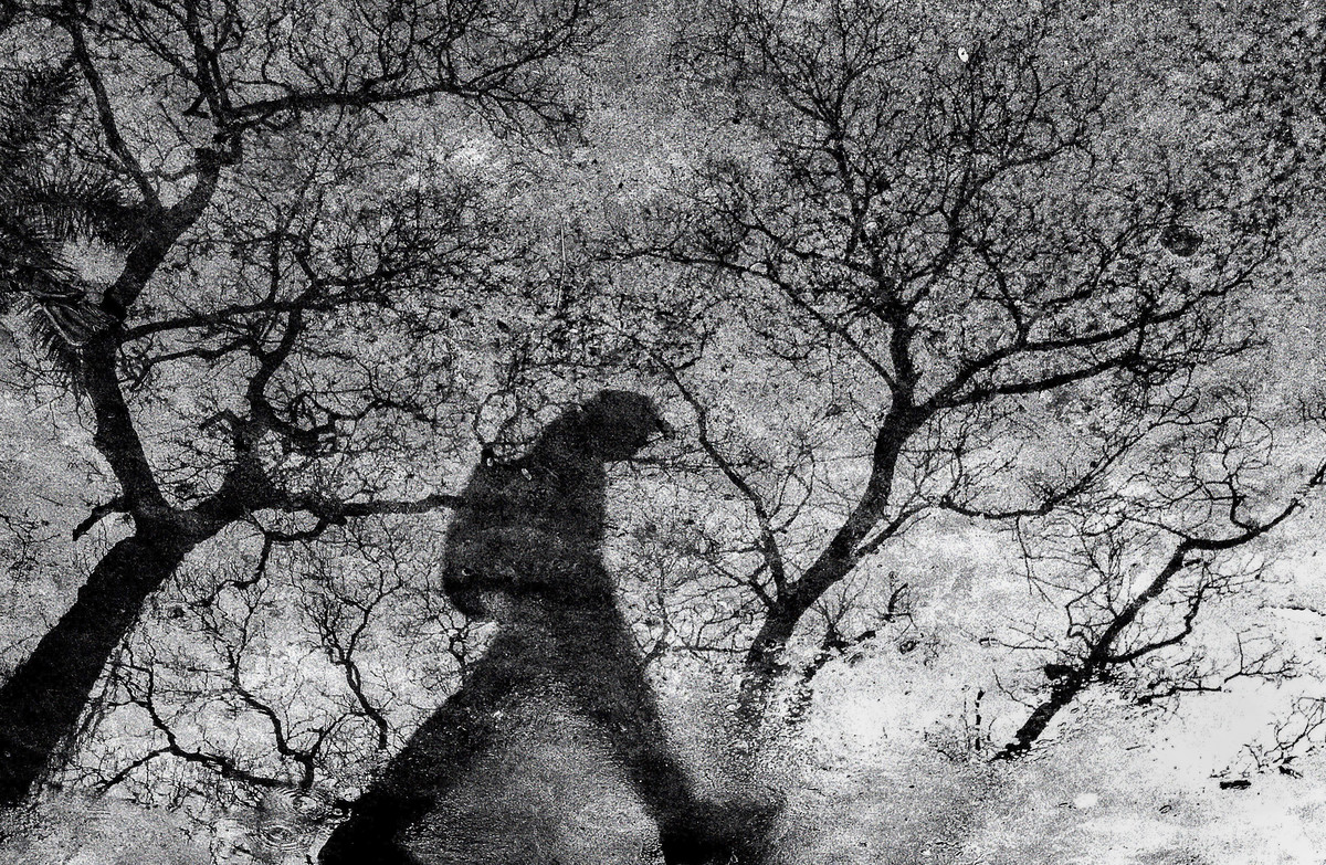 A Walk After The Rain Digital Print by Subhashis Halder,Image