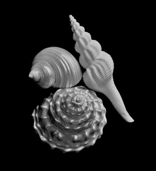 Seashells No. 6 by M. Shafiq, Image Photography, Digital Print on Archival Paper, Black color
