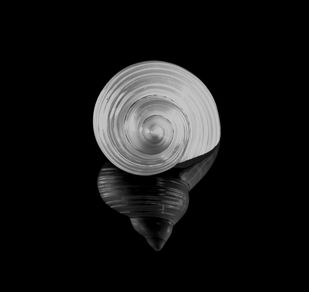Seashells No. 17 by M. Shafiq, Image Photography, Digital Print on Archival Paper, Black color