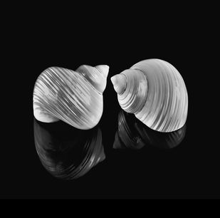 Seashells No. 2 by M. Shafiq, Image Photography, Digital Print on Archival Paper, Nobel color