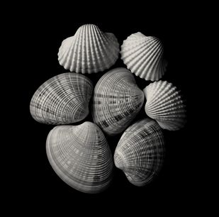 Seashells No. 14 by M. Shafiq, Image Photography, Digital Print on Archival Paper, Cod Gray color
