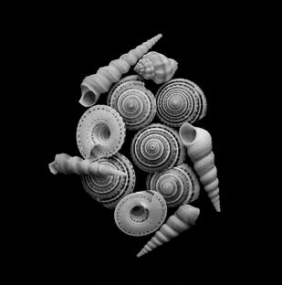 Seashells No. 26 by M. Shafiq, Image Photography, Digital Print on Archival Paper, Black color