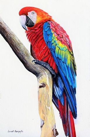 The Macaw by Sonali Sengupta, Realism Painting, Acrylic on Canvas, Pampas color