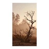The lone survivor by Sagar Mahendru, Conceptual Photography, Digital Print on Enhanced Matt, Brown Derby color
