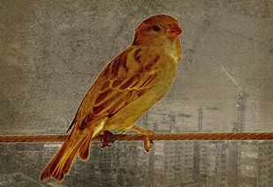 Sparrow - Limited Edition of 20 by Mayurakshi, Digital Digital Art, Giclee Print on Hahnemuhle Paper, Roman Coffee color
