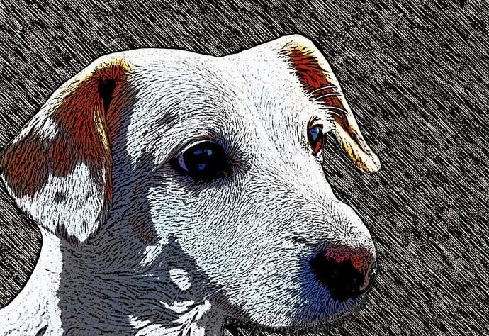 Dog - Limited Edition of 20 by Mayurakshi, Digital Digital Art, Giclee Print on Hahnemuhle Paper, Eerie Black color