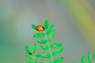 red beetle by Arif Amin, Digital Photography, Digital Print on Paper, Green color