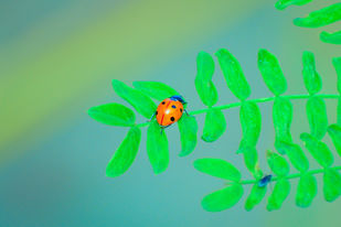 red beetle by Arif Amin, Digital Photography, Digital Print on Paper, Teal color
