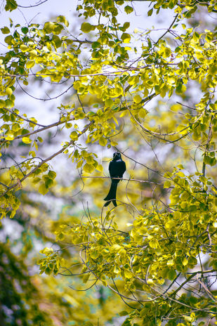 Black Bird by Arif Amin, Digital Photography, Digital Print on Paper, Olive color