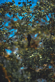 Black Bird by Arif Amin, Digital Photography, Digital Print on Paper, Gray color