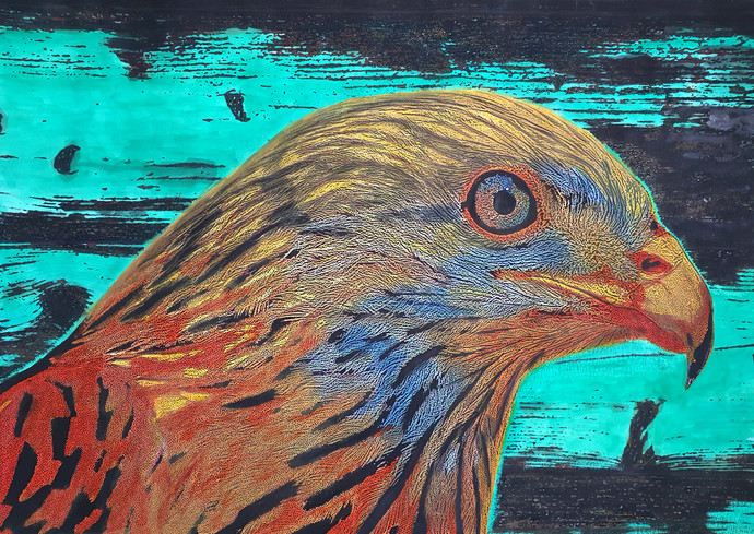 Bald Eagle by Mayurakshi, Illustration Painting, Mixed Media on Paper, Gray color