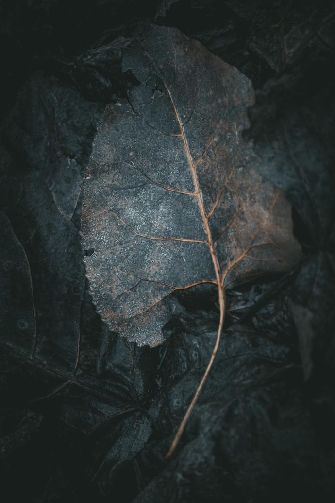 Leaf by Arif Amin, Digital Photography, Digital Print on Paper, Gray color