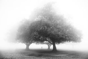 Winter Morning by Arka, Digital Photography, Digital Print on Archival Paper, White color