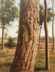 Trunk 2 by Arabinda Mukherjee, Realism Painting, Oil on Canvas, Orange color