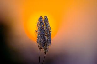 sunset by Arif Amin, Digital Photography, Digital Print on Paper, Orange color
