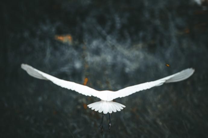 herone bird flying by Arif Amin, Digital Photography, Digital Print on Paper, Gray color
