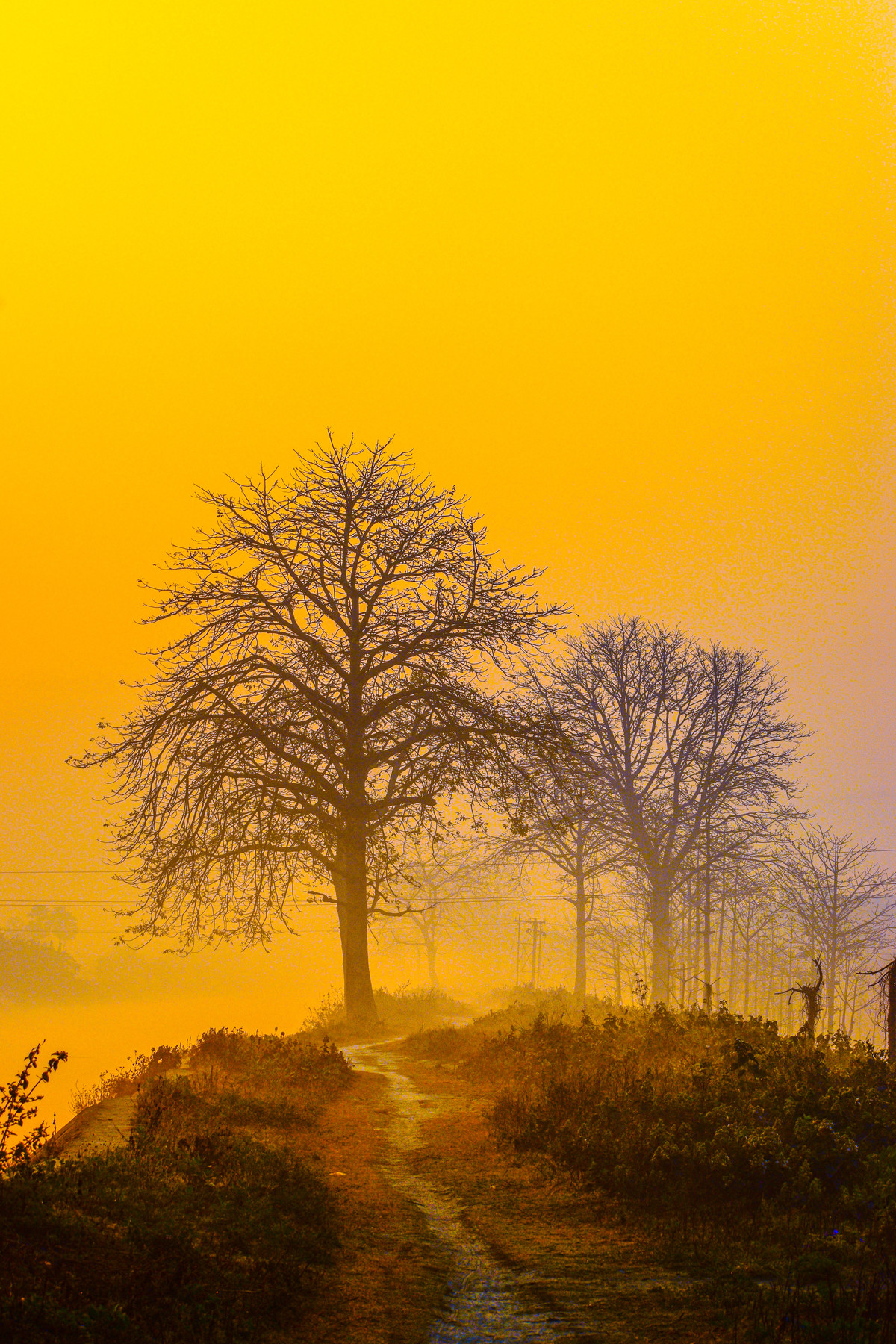 Sunrise view by Arif Amin, Digital Photography, Digital Print on Paper, Yellow color